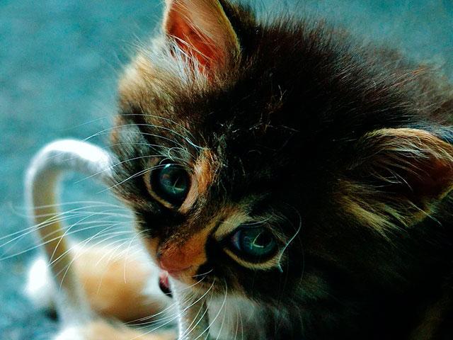 Кот мог перегрызть кабель монитора