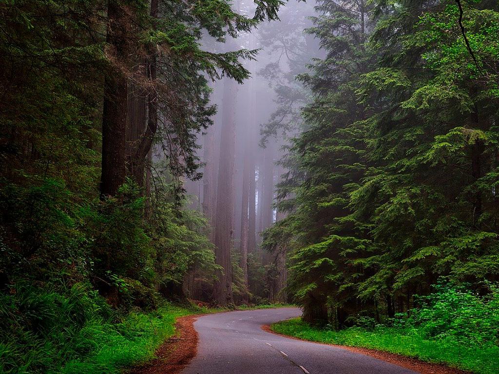 Лес с высокой глубиной цвета